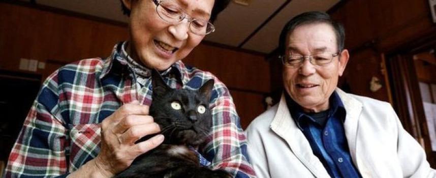 Gato vuelve a casa tres años despues del tsunami japones