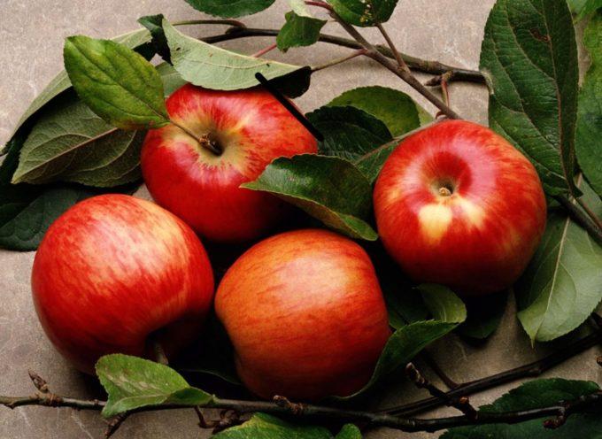 Científico quiere crear fruta prohibida mencionada en la Biblia