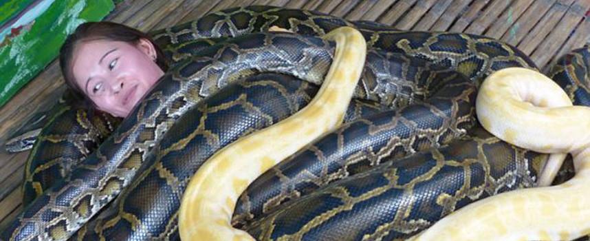 Un zoológico brinda masajes de serpientes