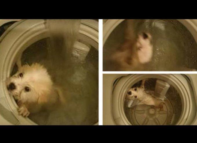 Bañó al perro en la lavadora, lo publicó en Facebook y enfurece a Hong Kong