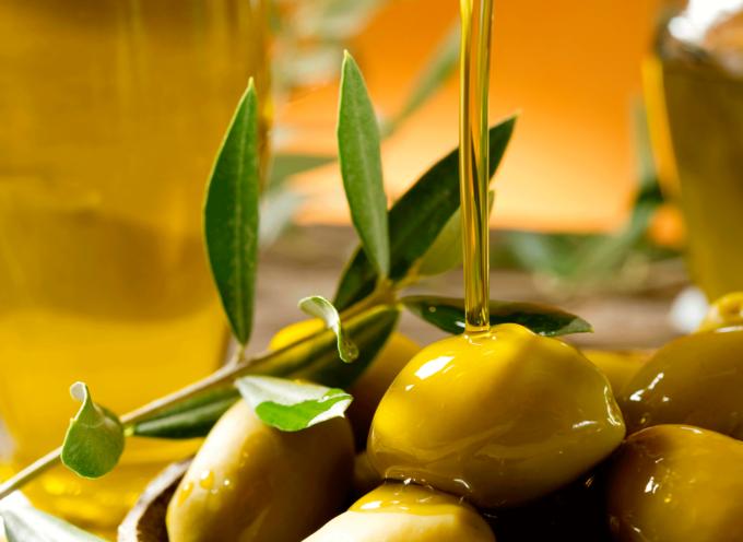 Judíos logran producir aceite puro de oliva, por primera vez en 2 mil años