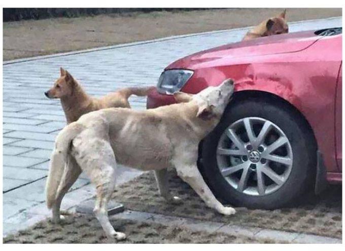 Insolito: La venganza de un perro contra quien lo maltrató