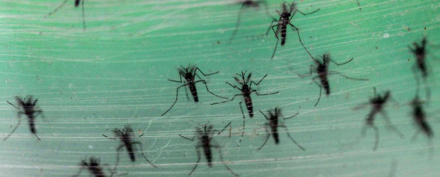 China inaugura la primera fábrica de mosquitos