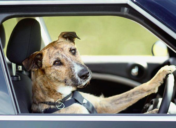 Insolito: Dejó a su perro en la camioneta y éste la tiró al agua