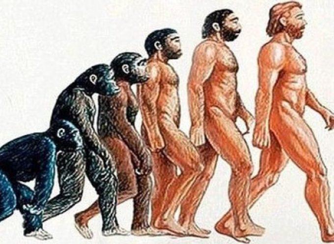 Descubren una gran diferencia entre el ADN de los humanos y Simios