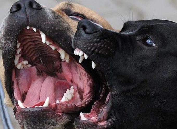 Ex-musulmán convertido sobrevive al ser lanzado a jaula con perros feroces