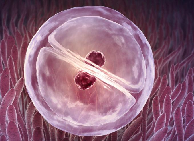 Científicos crean primer embrión artificial sin óvulos o esperma