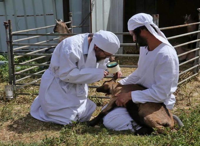 Judíos detenidos por intentar sacrificar animales en el Monte del Templo